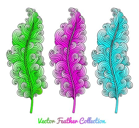 sophisticate: Set of bright curly feathers. Illustration