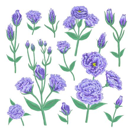 Handdrawn beautiful violet colored Eustoma plant big botany set. Elegant romantic floral elements design for wedding invitation, birthday postcard. EPS vector illustration isolated on white background