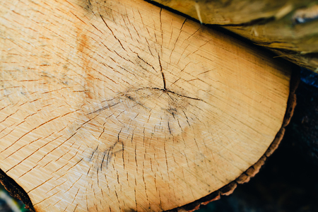 annual ring annual ring: Texture of a cut tree close up, a wooden circle Stock Photo