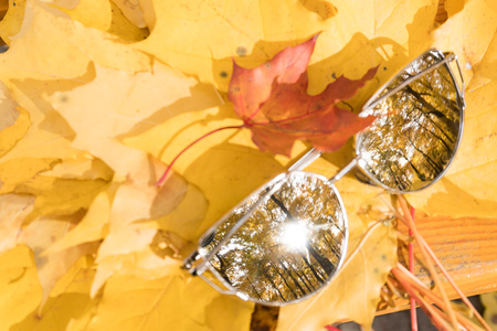 sunglasses lie on yellow autumn maple leaves
