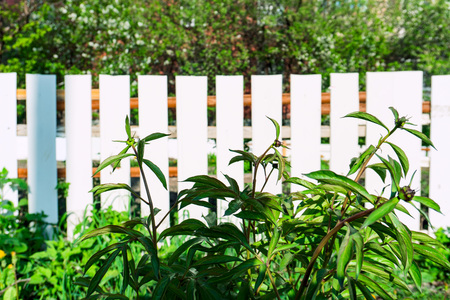 green grass against a white fence