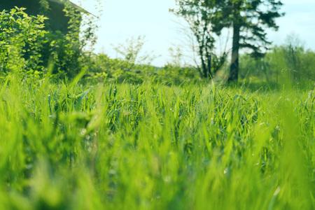 paysage coucher de soleil ciel et herbe verte et arbres