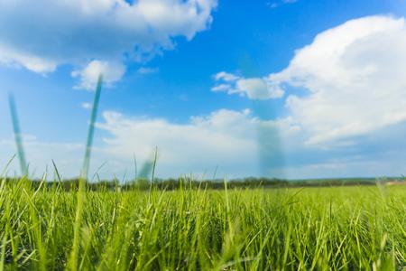paisaje de jugosa hierba verde y cielo azul