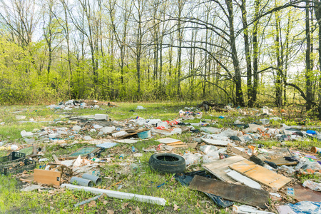 garbage dump in the spring forest