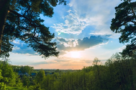 landscape sunset sky and green grass and trees 写真素材