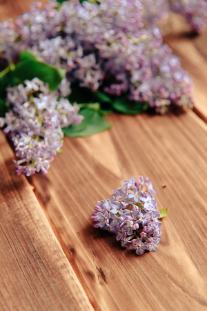 branches of a blossoming lilac on a wooden background Standard-Bild - 124652744