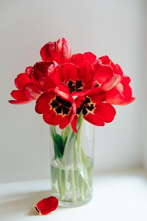 Flores rojas en un jarrón transparente sobre un fondo blanco. Foto de archivo
