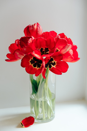 red flowers in a transparent vase on a white background Stockfoto