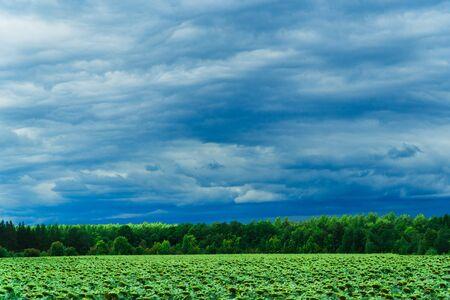 green field with skyline and dark stormy sky