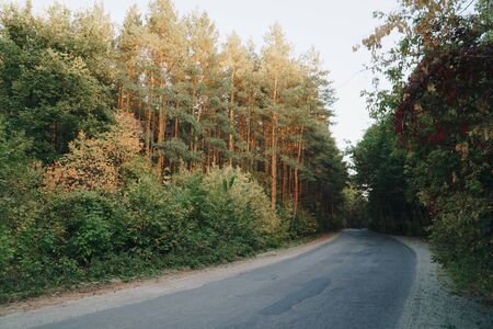 autumn panorama of the road near the yellow forest 1