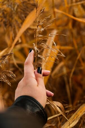 girl holds yellow dry autumn grass on a yellow background