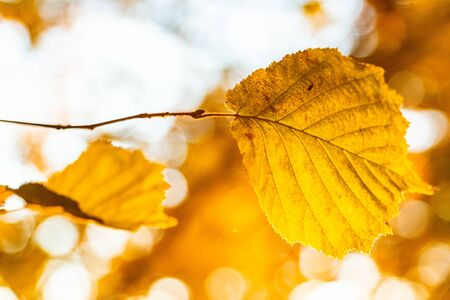 some yellow autumn leaves on a tree branch Фото со стока