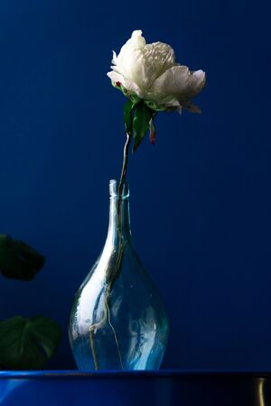 white flower in a glass bottle on a blue background Фото со стока - 132878231