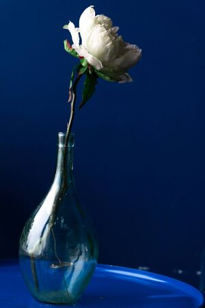 white flower in a glass bottle on a blue background
