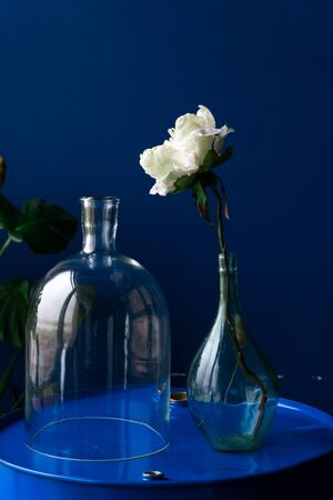 white flower in a glass bottle on a blue background Фото со стока - 132878969
