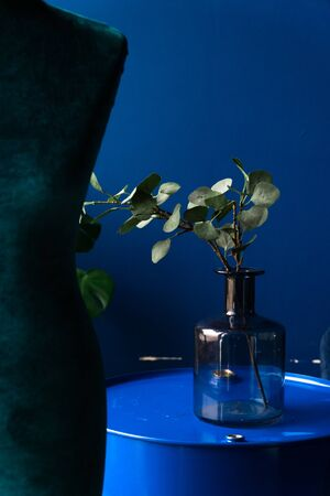 green plant in a glass bottle on a blue background Фото со стока