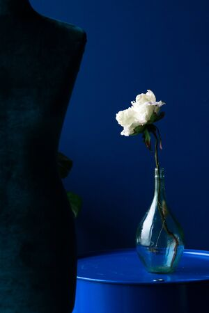 white flower in a glass bottle on a blue background Фото со стока - 132896035