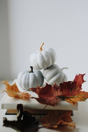 white small pumpkins on a white background