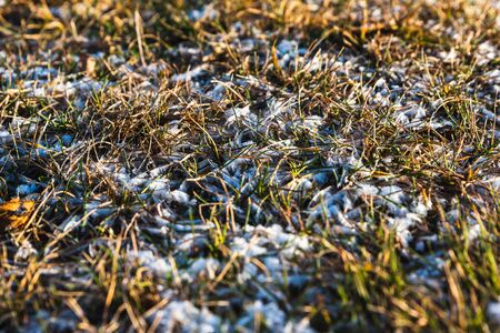 autumn dry grass covered with the first snow Фото со стока
