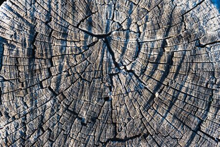 volumetric texture of old wood in the cut