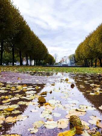 beautiful autumn landscape in Sunny weather o Фото со стока - 136202133