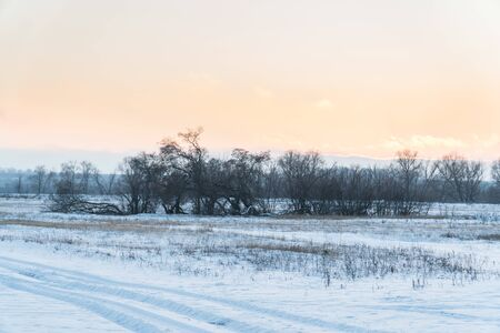 winter landscape of fields and bushes in the setting sun 1