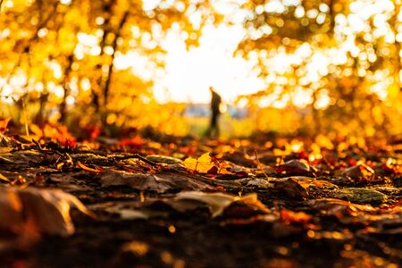 autumn landscape in the park in sunny weather 1 Фото со стока