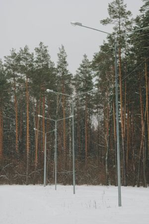 beautiful winter Park with tall pines and white snow Фото со стока