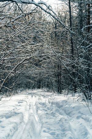 ski track in a beautiful fairytale winter forest Фото со стока
