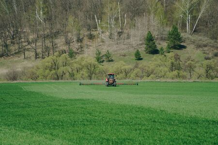The tractor is working on a green spring field. Agriculture with cereal crops