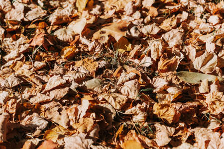Pattern of dry yellow leaves lying on the ground Фото со стока