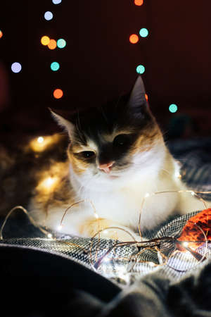 Cute red and white cat with Christmas lights Фото со стока