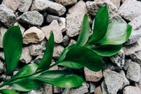 Green plant with leaves on small granite stones Фото со стока