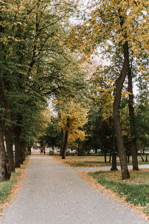 Alley in the autumn Park with a path made of paving stones
