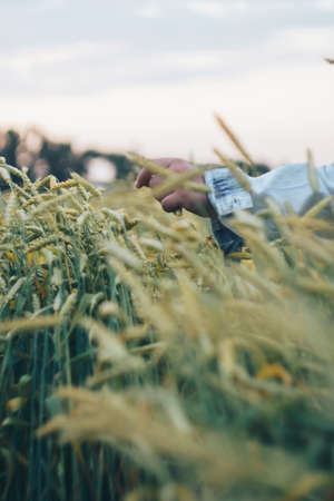 A woman in a denim jacket touches green ears of wheat with her hand 1