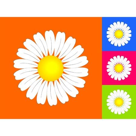 abloom: manzanilla en el fondo de color