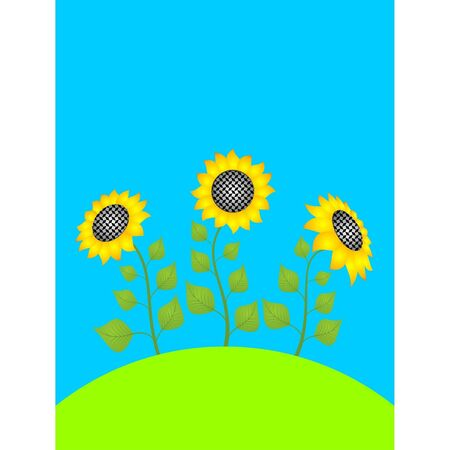 Three sunflowers on the green lawn Vector