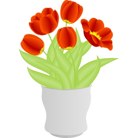 tulips isolated on white background: Red tulips in white vase on white background