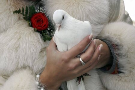 The bride with wedding white pigeons in the hands, meaning a symbolof two loving hearts and pure intentions photo