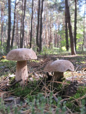 brethren: mushrooms Stock Photo