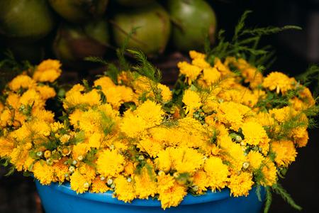 golden daisy: yellow chrysanthemum, golden daisy at local vietnamese market in basket Stock Photo