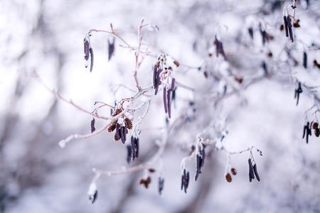 frozen trees: frozen trees branch macro background