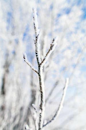 frozen trees: frozen trees branch macro