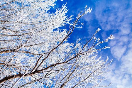 frozen trees with cool blue winter sky background Stock Photo
