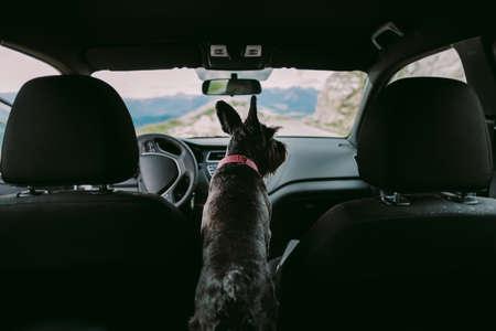 dog travel by car Reklamní fotografie