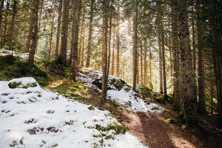 beautiful snowy winter forest landscape Stock Photo