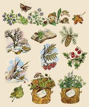 eberesche: Forest of nat�rliche Bilder in vintage Weise Gegenst�nde auf festem Hintergrund gemalt gesetzt