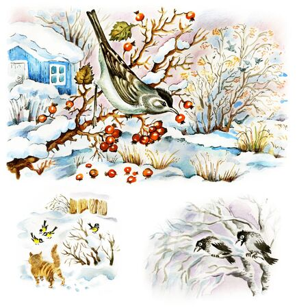 Winter in garden. Set of images, painted by photographer in mixed technique. Bird on hawthorn, cat watching tomtits, crows on birch.