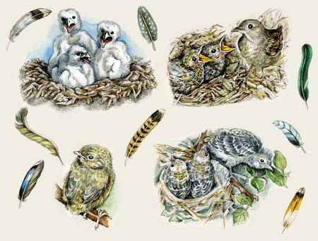 Feathers, nestlings of golden eagle, blackbird, nightingale`s and oriole`s nests Stock Photo - 18147408