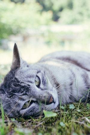 Stray cat lying on the grassland
